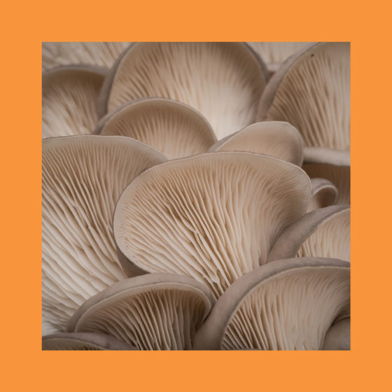 Fungal acne